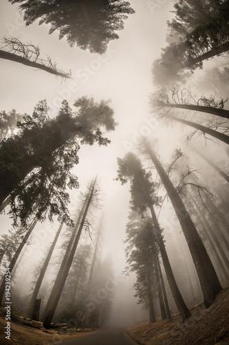 mgła, drzewa, las, dzikie, dziki las, chmury, las sekwoi, park narodowy Sekwoi, natura, natura amerykańska, krajobraz, krajobrazy