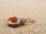 Lonely empty seashell on sand. - 194245695