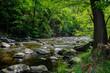 Gebirgsbach Gebirgsfluß mit Steinen und grünen Bäumen am Ufer bei sonnigem Wetter