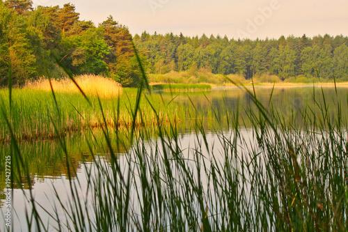 Fotobehang Pistache See Natur im Sonnenschein Schilf Wald Bäume Ruhe