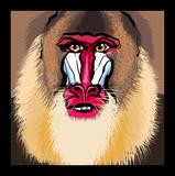 Portrait of a mandrill primate - 194281275