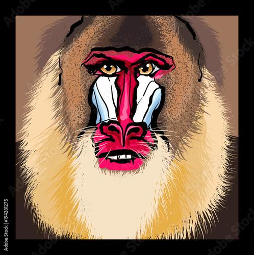 Foto op Plexiglas Art Studio Portrait of a mandrill primate