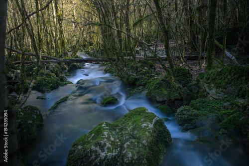 Aluminium Betoverde Bos Stream flowing through mossy forest