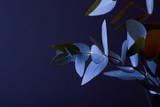 eucalyptus leaves on twigs in vase on dark