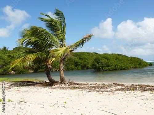 Foto op Canvas Tropical strand Double cocotiers sur le pLage de la baie du Moule, commune du Moule en Guadeloupe