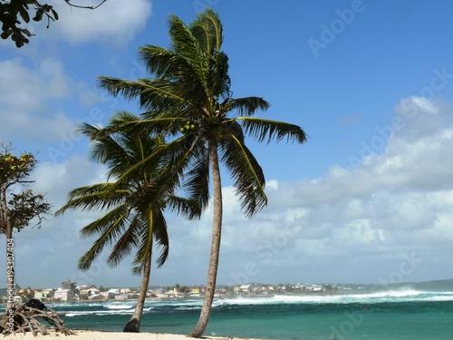 Deurstickers Tropical strand Cocotiers sur le pLage de l'Autre bord, commune du Moule en Guadeloupe