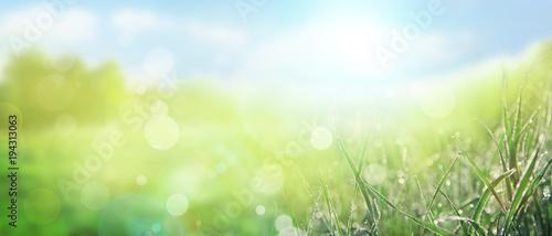 Gras im Frühling - 194313063