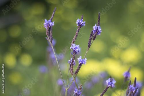 Aluminium Lavendel flor de lavanda