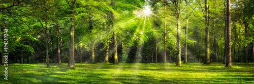 Grünes Wald Panorama im Sonnenlicht - 194319243