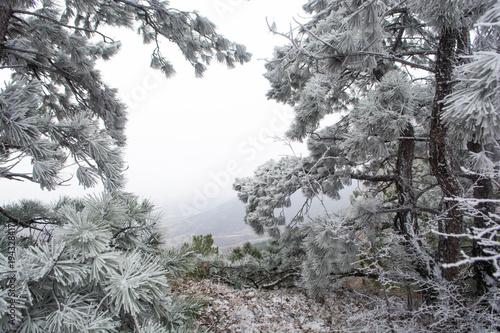 Foto op Plexiglas Donkergrijs Winter landscape