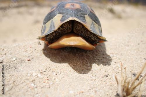 Aluminium Schildpad schildkröte cederberg