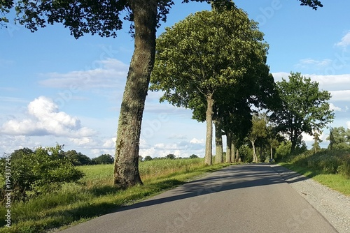 Tuinposter Weg in bos Droga z drzewami