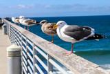 Birds on Rail - 194344406