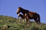 Cavalo selvagem, calados selvagens - 194351422