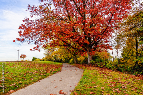 Fotobehang Honing empty path in an autumn park with red and yellow trees