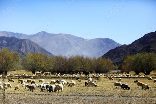 Papiers peints Bleu ciel flock of sheep in the mountains
