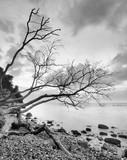Küstenlandschaft im Nationalpark Jasmund, Steilküste, abgestürzte Bäume, Ostsee, Insel Rügen, Deutschland, schwarz-weiß - 194392635