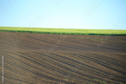 Staande foto Cappuccino plowed field. .Arable land and field with green wheat. Green field, brown arable land.Agrarian natural background