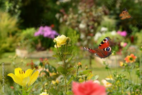 Fotobehang Geel Schmetterling 420