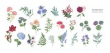 Collection of popular floristic flowers and decorative plants isolated on white background. Set of beautiful floral decorations. Botanical colorful hand drawn vector illustration in vintage style. - 194398298