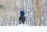 Young rider girl on bay horse walking on snowy field in winter. Winter equestrian activity background - 194398442
