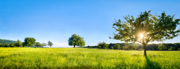 Grüne Landschaft mit Wiese, Bäumen und Feldern © eyetronic