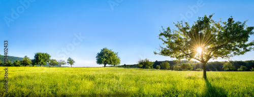 Zielony krajobraz z łąki, drzew i pól