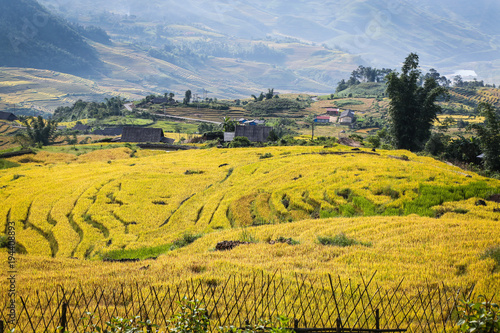 Fotobehang Honing Terraced rice fields in the North mountains of Vietnam. Lao Cai province.
