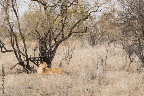 Fotobehang Baobab Leone