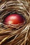 Easter Egg - 194410477
