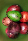 Colorful Speckled Easter Egg - 194411017