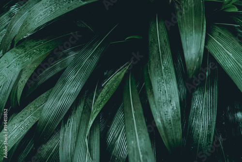 Plant background - 194413852