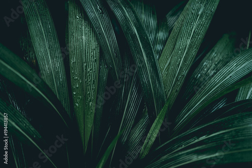 Plant background - 194413857