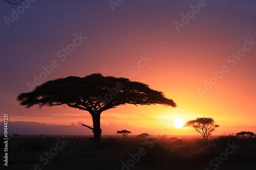 Fotobehang Lion Tanzania