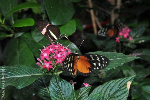 Fotobehang Vlinder papillons
