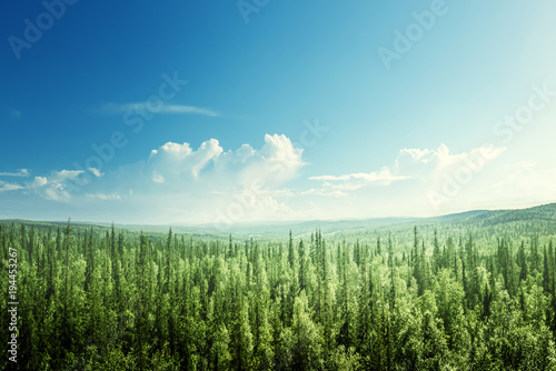 Fotobehang Pool fir tree forest in sunny day