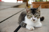 Young cat lying on the ground, Look with suspicion.