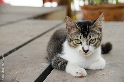 Fototapeta Young cat lying on the ground, Look with suspicion.