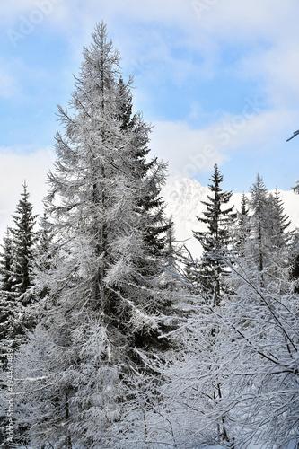 Fotobehang Donkergrijs Alberi nel bosco innevato