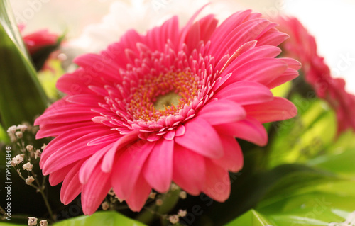 Fotobehang Gerbera Flowers background with bokeh effect. Close up. Selective focus. Bright bouquet, sunny lights.