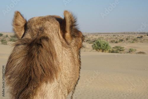 Aluminium Kameel Camel von Hinten