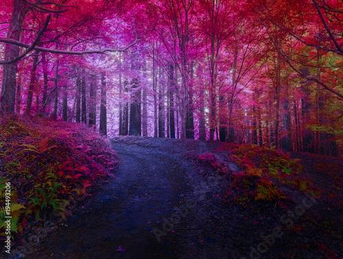 Staande foto Weg in bos paisaje experimental surrealista, mistico, con efecto sueño