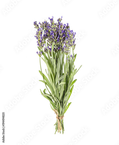 Fotobehang Lavendel Lavender bunch white background Fresh provencal flowers