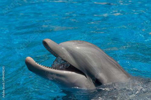 Fotobehang Dolfijn Delphin