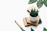 Succulent and craft notepad on white background. flat lay, top view. Minimal background