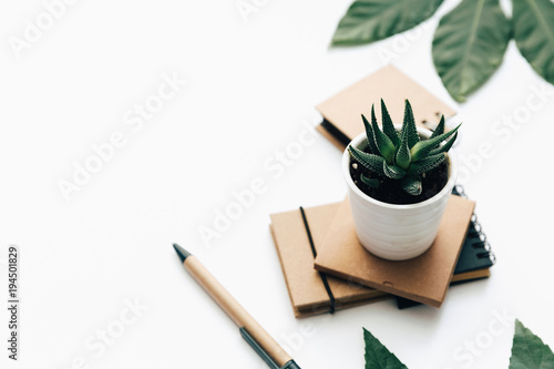 Foto Murales Succulent and craft notepad on white background. flat lay, top view. Minimal background