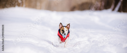 Deurstickers Bol Dog rushing through deep snow with colorful toy in mouth