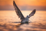 Seagull landing in the sea at sunrise - 194515269