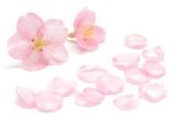 桜 花びら 春 背景 - 194521813