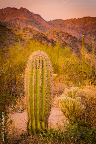 Fotobehang Honing cactus in a desert in southwest United States